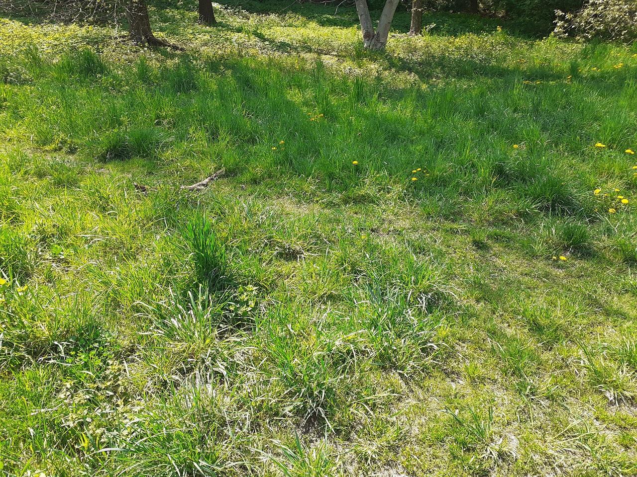 grass terrain 1