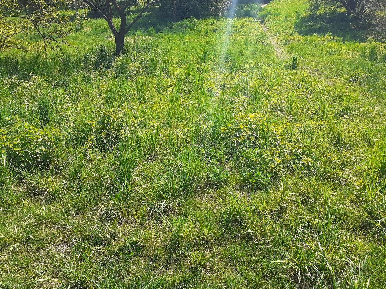grass terrain 2