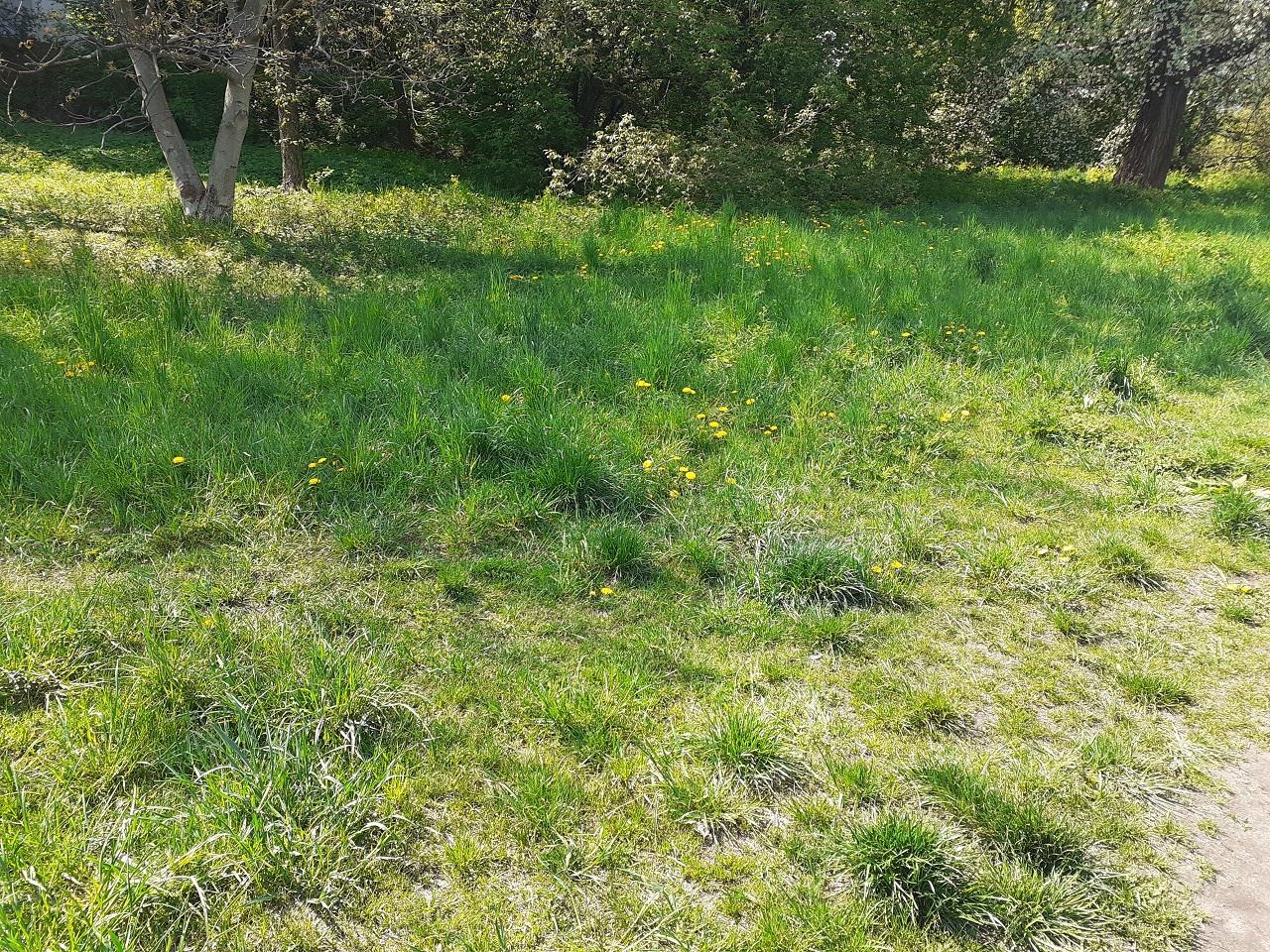 grass terrain 3