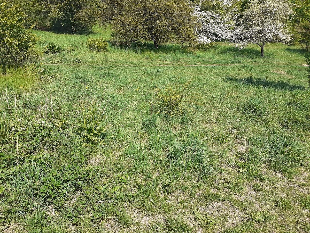 grass terrain 4