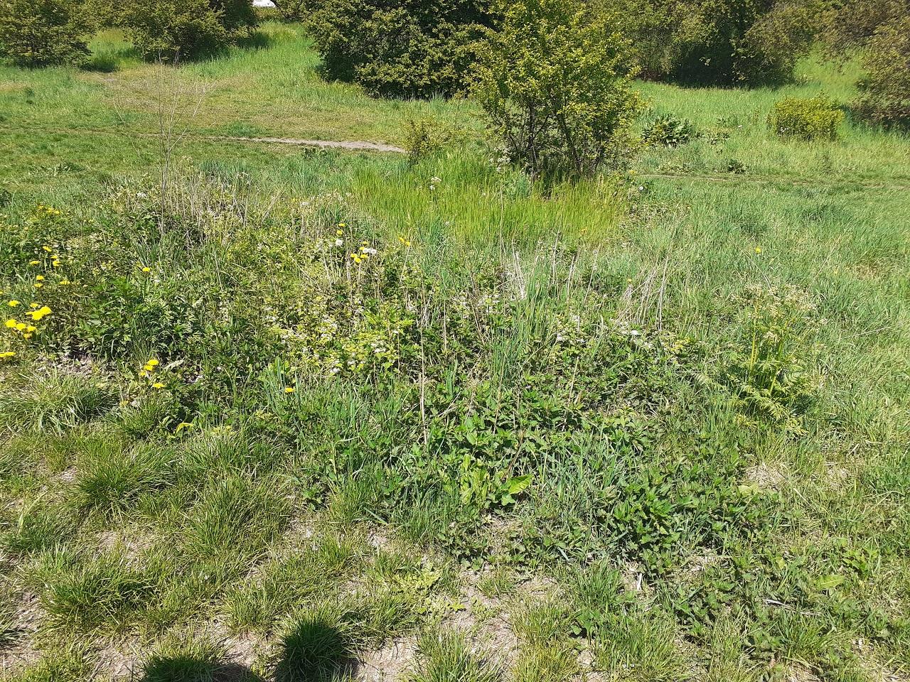 grass terrain 5