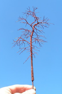 example tree 1