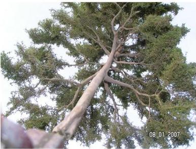 example tree 3