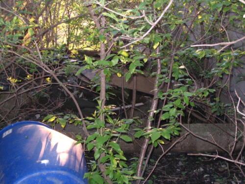 the dump pit
